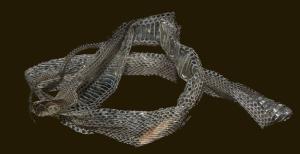 snake skin 5